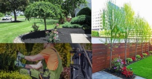 Landscaping and Tree care Nassau county nY