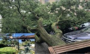 Tree Cutting service Nassau county Ny