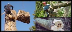 Nassau county Tree Removal Ny