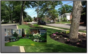 Landscaping and Tree service
