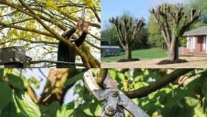 Tree Trimming Certified arborist Nassau County New York