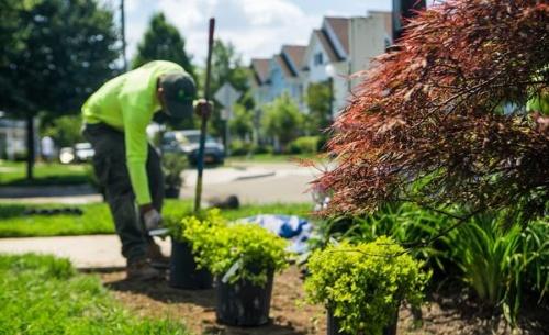 tree planting service Nassau county new York