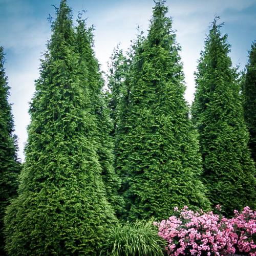 Planting Trees Long island ny transplantation