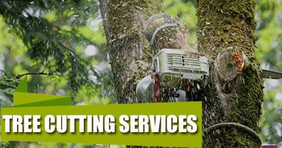 Tree services in Nassau county Ny